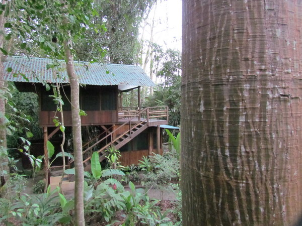 Our treehouse at Tortuga Negra