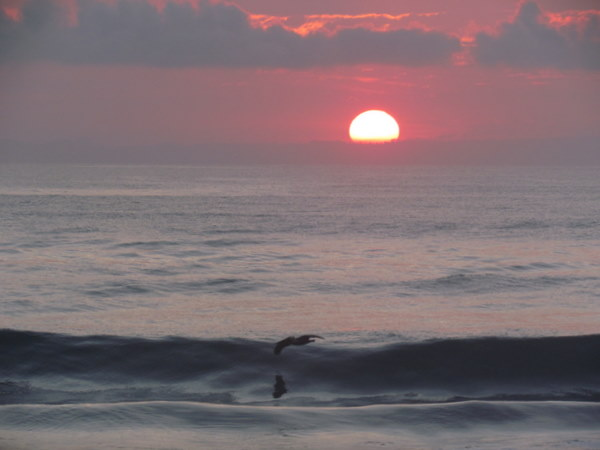 Lone pelican flying at sunrise over playa Preciosa south of Puerto Jimenez